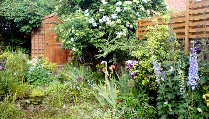 Wildlife friendly garden, Brighton